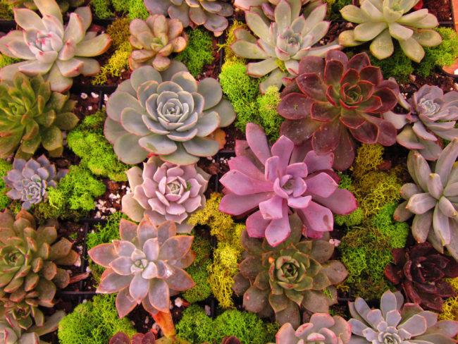 Xeriscaping In A Succulent Garden